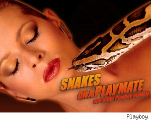 Snakes on a Playmate