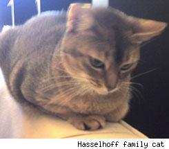 Hasselhoff Family Cat