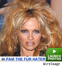 Pamela Anderson photo gallery: Click to launch