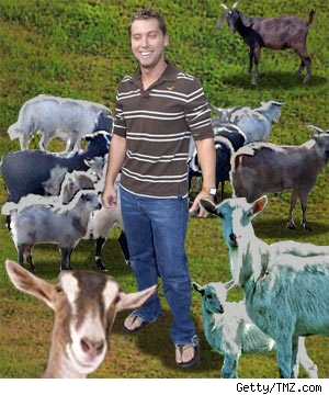 Lance Bass and Goats