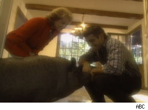 Barbra Walters, George Clooney and his pet pig
