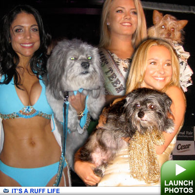 Celebs and their dogs: Click to launch photos