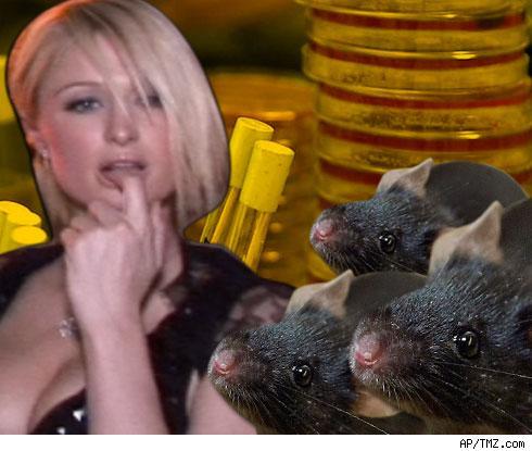 Paris Mice