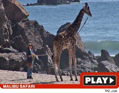Giraffe: Click to watch