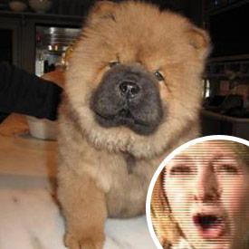 Martha's Stewart's Dog