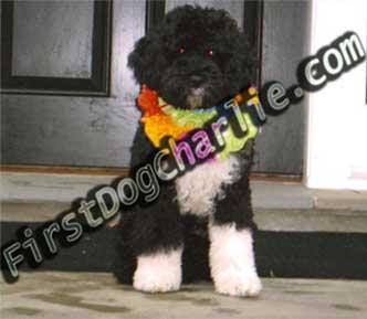 Obama's Puppy