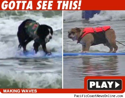 Surfing dogs: Click to watch