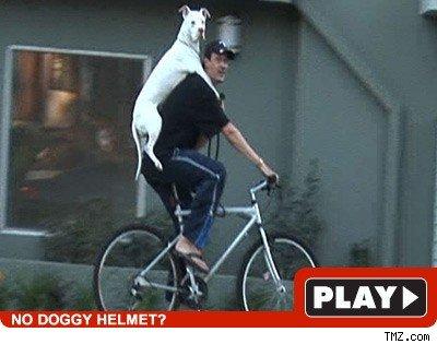 Pitbull biker: Click to watch
