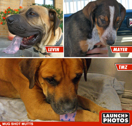 Levin, Mayer and TMZ -- 3 Lucky Dogs