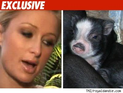 Paris Hilton gets a pig!