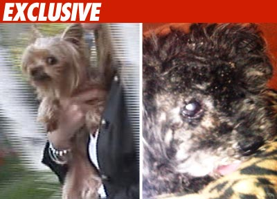 Casey Johnson's Dogs Pass Poochie Physical