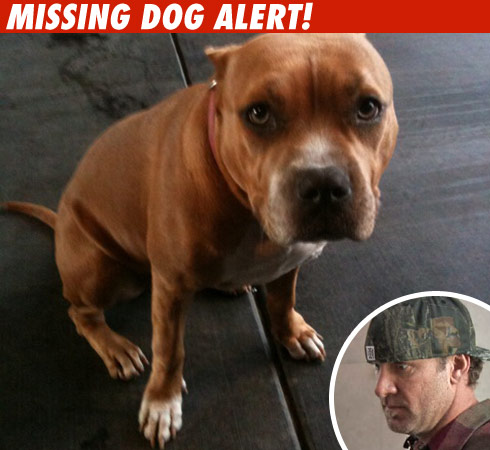Jesse James ' Missing Dog