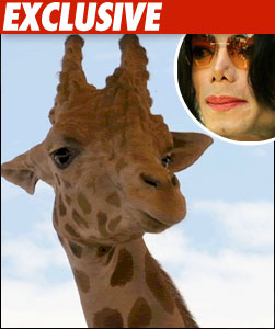 GIRAFFE AND MICHAEL JACKSON
