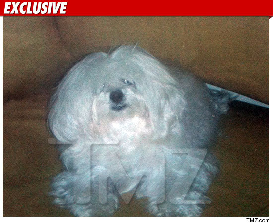0830-dog-tmz-ex-2-credit