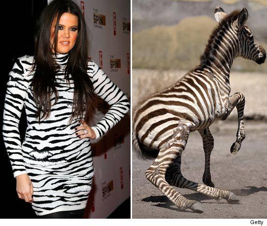 1007_khloe_zebra