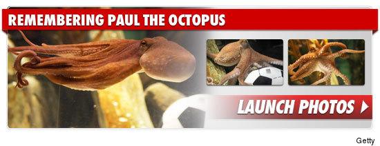 1026_remembering_paul_octopus_footer