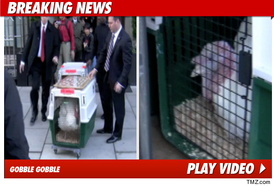112110_turkeys_video_tmz