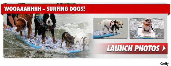 0304_surfing_dogs_footer