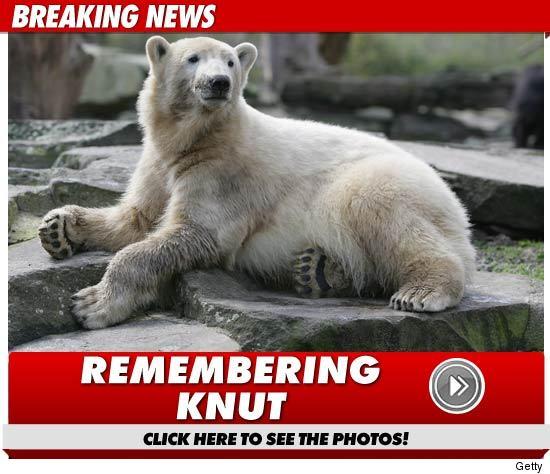 Knut Dead
