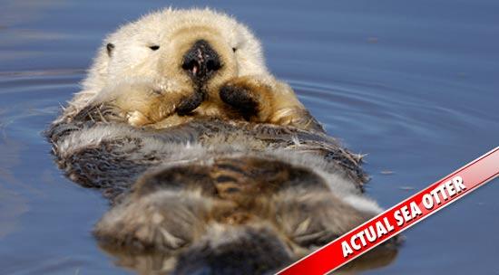 0321_sea_otter