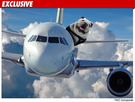 0329_dog_plane_ex