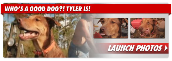 0718_tyler_dog_footer_v2