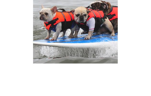 Fun Photos: Dogs Go Surfing in Southern California!