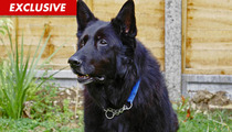 Homeless 'Harry Potter' Dog -- Too Famous to Adopt