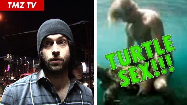 110711_turtle_still