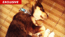 Selena Gomez' Dog Rocks Out ... Nearly Dies