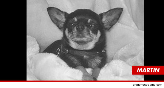 Kelly Osbournes dog Martin