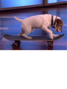 "Uggie the Dog is Adorable on ""Ellen!"""