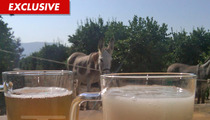 'Fear Factor' -- NBC Debating Donkey Semen ... Episode in Jeopardy