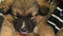 Drew Barrymore & Fiance Adopt ... A Dog!
