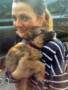 Drew Barrymore & Fiance Adopt ... A Dog!