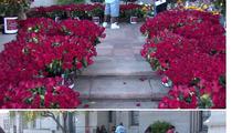 Michael Jackson's Death -- Fans Send 10k Roses to MJ's Grave
