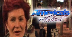 Sharon Osbourne -- I'm Quitting 'America's Got Talent'