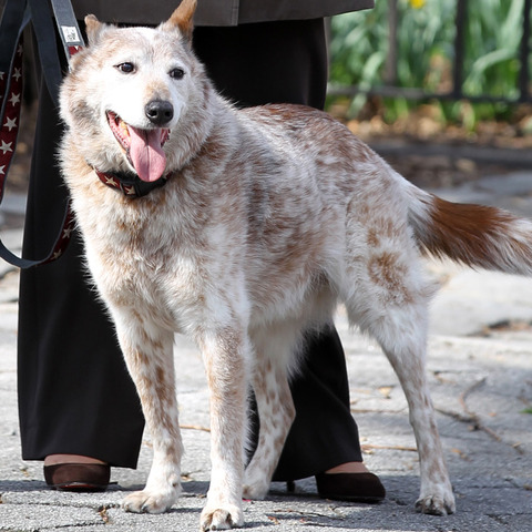 Σε ποιον ανήκει αυτός ο σκύλος;