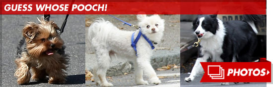 0831_guess_pooch_footer