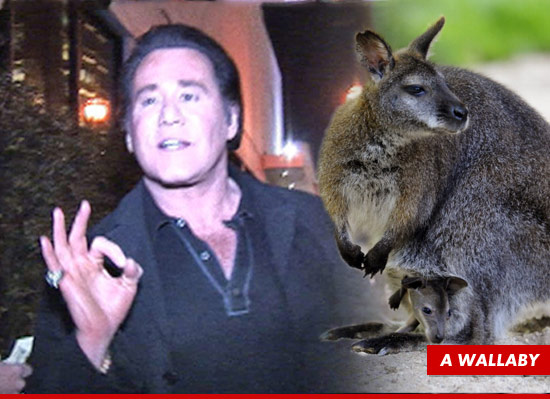 1009-wayne-newton-tmz-wallaby