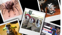 TMZ's Doggie Dress Up Contest -- Final 5!