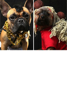 New York's Cutest Pups Celebrate Halloween Early!
