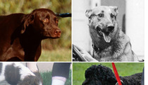 Presidential Pups -- Guess Whose Dog!
