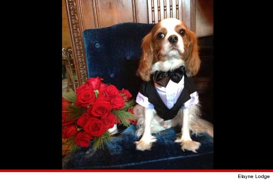 0101_subasset_hugh_crystal_dog