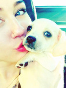 Meet Miley Cyrus' Adorable New Puppy!