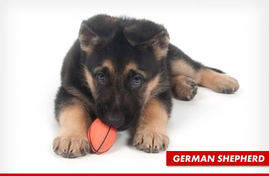 0225_german_shepherd