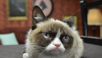 Grumpy Cat -- Pamprrrrd at Friskies Photo Shoot