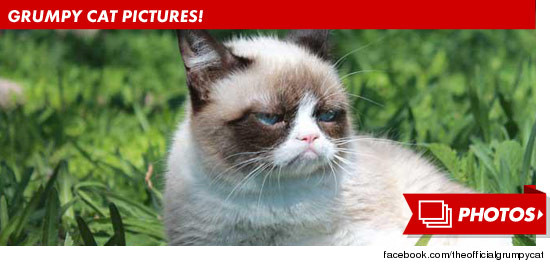 0308_grumpy_cat_photos_footer