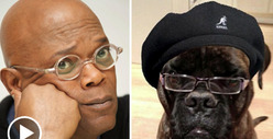 Samuel L. Jackson Has a Doggie Knockoff -- Samuel L. DOGSON