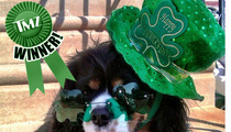 TMZ's St. Paddy's Day Picture Contest -- WINNER!